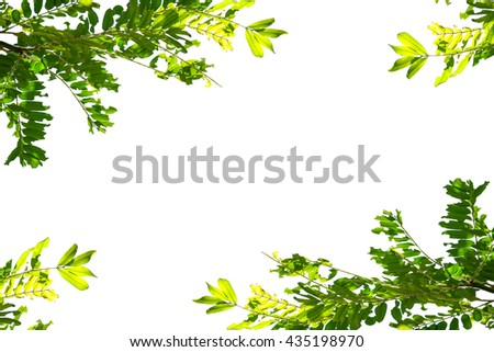 green leaf isolated flame on white background