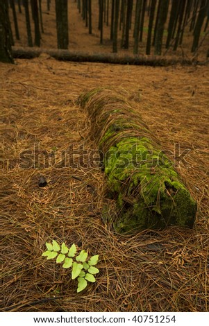 Green leaf isolated in the forest - stock photo