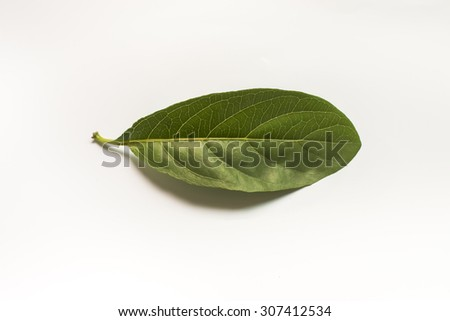 Green leaf. Isolated on a white. - stock photo