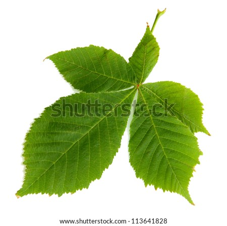 green leaf, isolated on white - stock photo