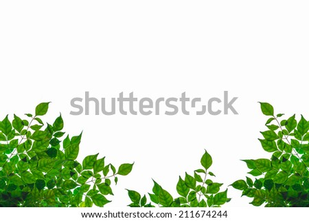 Green leaf isolated on white background - stock photo