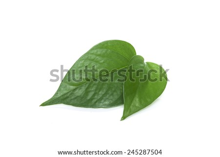 green leaf(leaves) isolated white at the studio. - stock photo