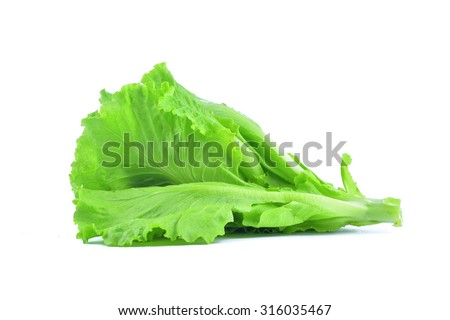 Green leaf lettuce isolated on white background