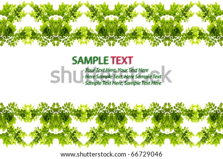 green leaf love heart frame isolated on white background