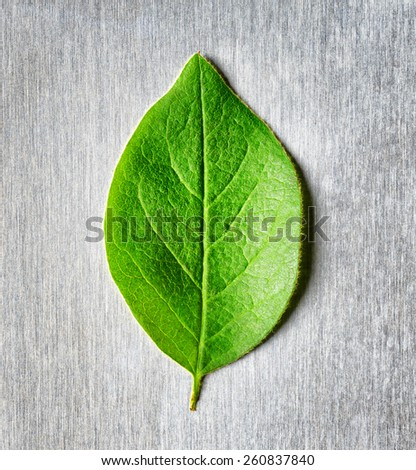Green leaf lying in the rays of light on scratched metal. Top view. Modern technology and nature compatible. New technology on guard ecology. Eco-friendly concept. - stock photo