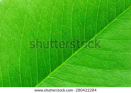 Green leaf macro. - stock photo