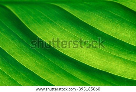 Green leaf macro - stock photo