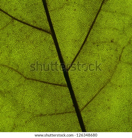 Green leaf. Macro image in square format