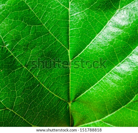 Green leaf macro shot - stock photo