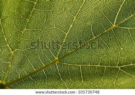 Green leaf macro shot, shallow DOF - stock photo