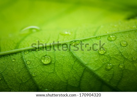 Green leaf macro with water drops - stock photo