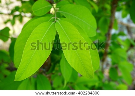 green leaf nature background and wallpaper