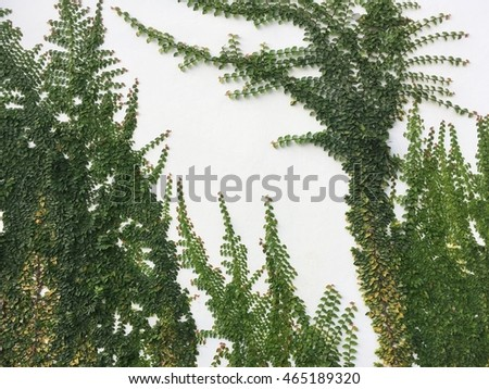 green leaf nature on white wall texture background