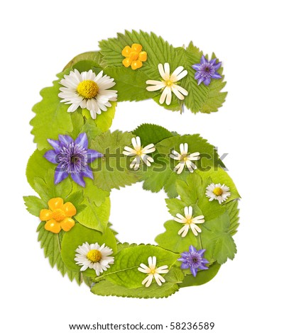 Green leaf  number whit flower in white. Number 6