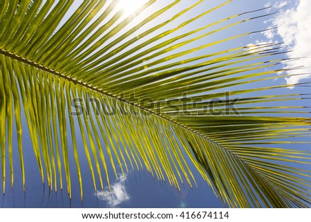 Green leaf of a palm tree with blue sky in background.