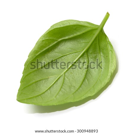green leaf of basil on a white background