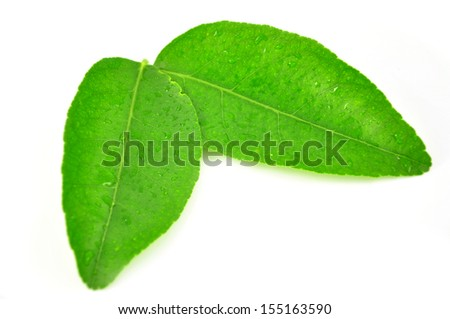 green leaf of citrus-tree. Isolated on white background. Close-up. Studio photography.  - stock photo