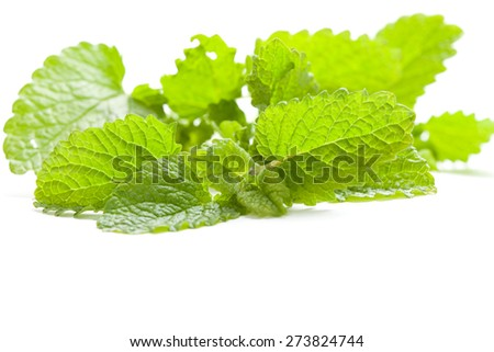 green leaf of fresh lemon balm on white background, isolated - stock photo