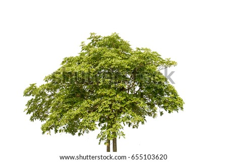 green leaf of treetop,isolated on white,