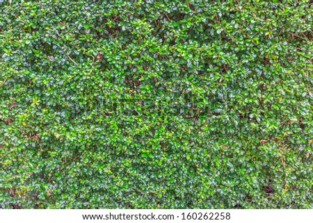green leaf of wall background