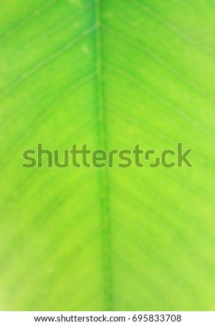 Green leaf on background
