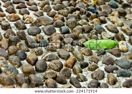 Green leaf on footpath - stock photo