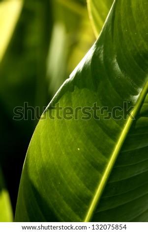 Green leaf on light - stock photo