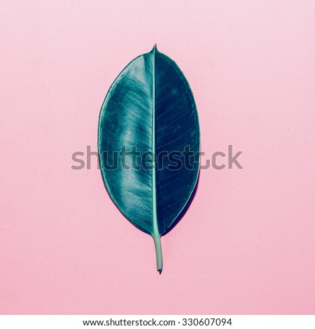 Green Leaf on pink background. Minimal style - stock photo