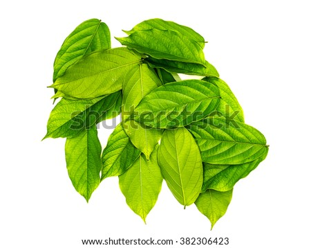 Green leaf on white