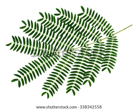 Green leaf on white background. - stock photo