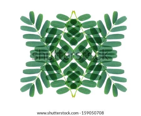 Green leaf on white background , art of green leaf - stock photo