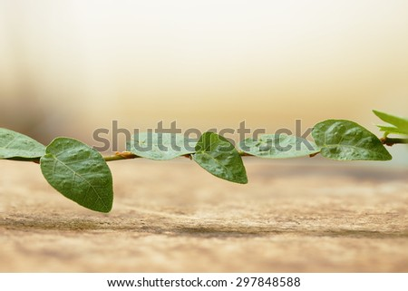 Green Leaf on Wooden for Background Uses.