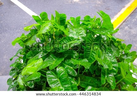 Green leaf plant after raining - stock photo