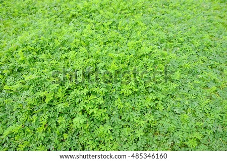 green leaf plant on grass lawn