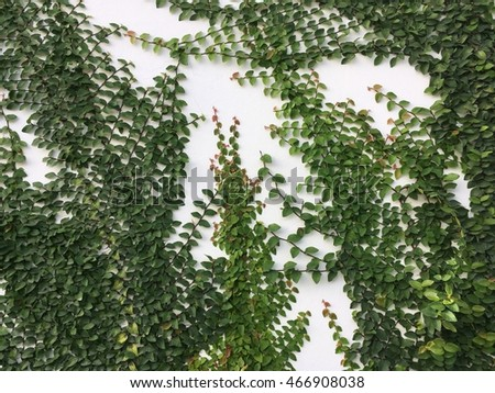 green leaf plant on white stone texture background