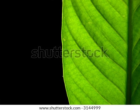 Green Leaf Space Text Symbol Growth Stock Photo 3144999 Shutterstock