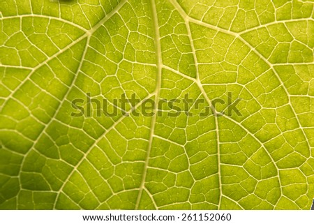 green leaf texture. - stock photo