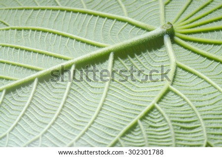 green leaf texture as background - stock photo