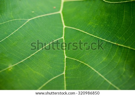 green leaf texture background