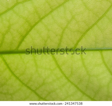 green leaf texture ,Close up
