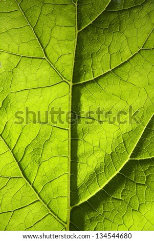 Green leaf texture closeup - stock photo