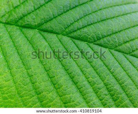 Green leaf texture. Green leaves background - stock photo