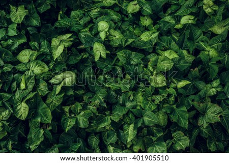 Green leaf texture. Leaf texture background - stock photo