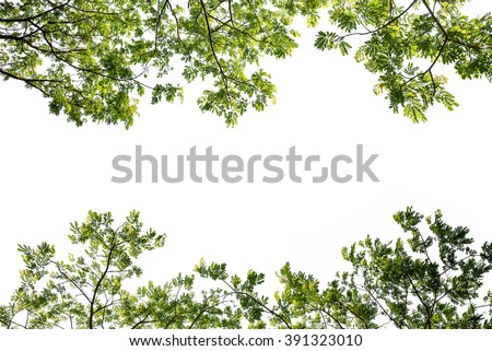 green leaf tree branch isolated on white background - stock photo