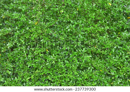 green leaf tree plant wall fence background - stock photo