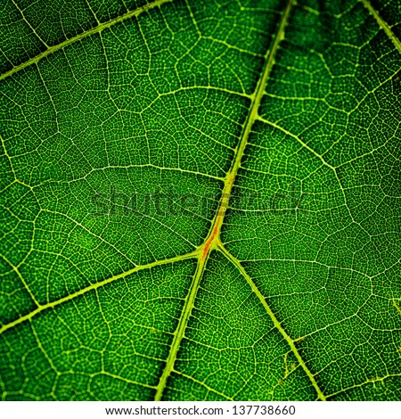 green leaf very close up - stock photo