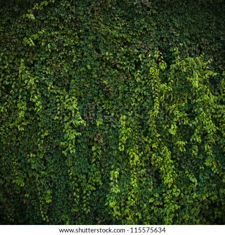Green leaf wall background - stock photo