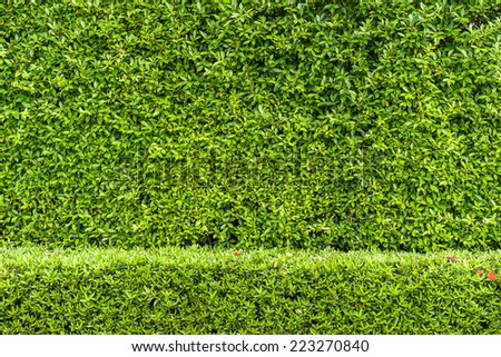 Green leaf wall background. - stock photo