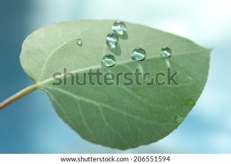 Green Leaf Water Drops - stock photo