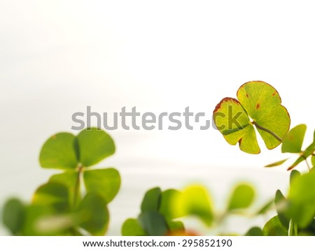 green leaf/water plant leaf.